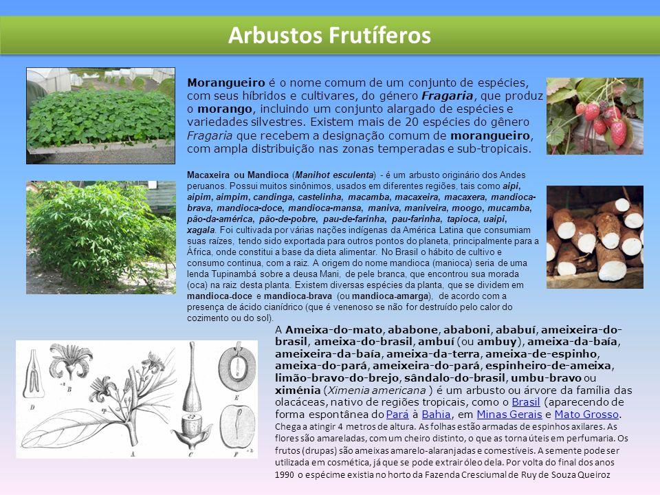Arbustos Frutíferos Morangueiro é o nome comum de um conjunto de espécies, com seus híbridos e cultivares, do género Fragaria, que produz o morango, incluindo um conjunto alargado de espécies e variedades silvestres.