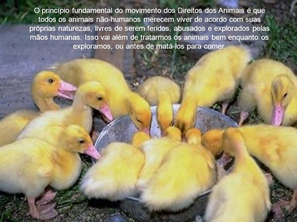 Direitos dos Animais Chegará o dia em que o restante da criação vai adquirir aqueles direitos que nunca poderiam ter sido tirados deles senão pela mão da tirania.