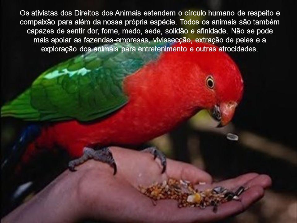 O princípio fundamental do movimento dos Direitos dos Animais é que todos os animais não-humanos merecem viver de acordo com suas próprias naturezas, livres de serem feridos, abusados e explorados pelas mãos humanas.