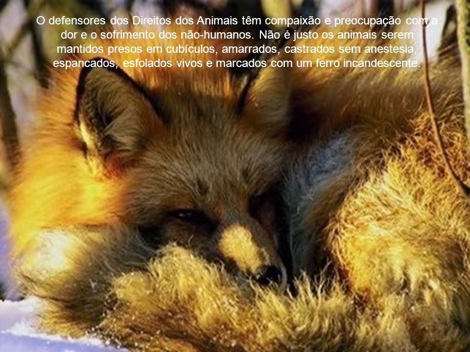 O defensores dos Direitos dos Animais têm compaixão e preocupação com a dor e o sofrimento dos não-humanos.