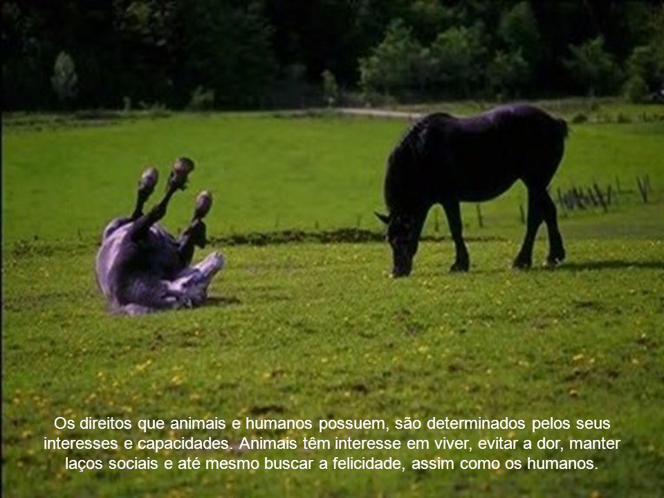 Os direitos que animais e humanos possuem, são determinados pelos seus interesses e capacidades.