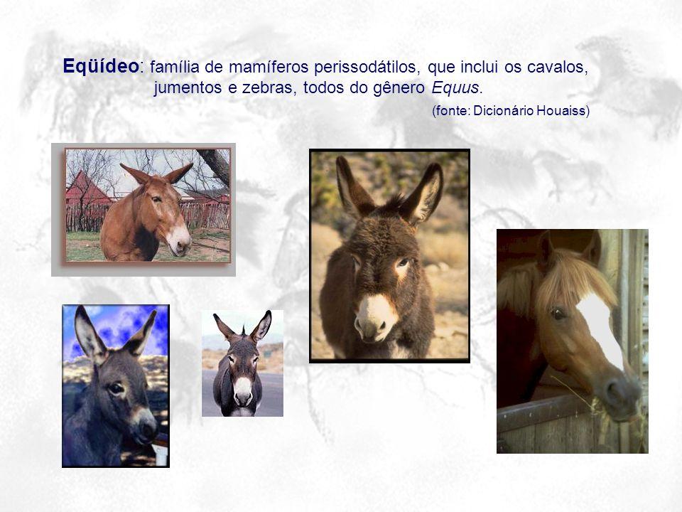 Eqüídeo: família de mamíferos perissodátilos, que inclui os cavalos, jumentos e zebras, todos do gênero Equus. (fonte: Dicionário Houaiss)
