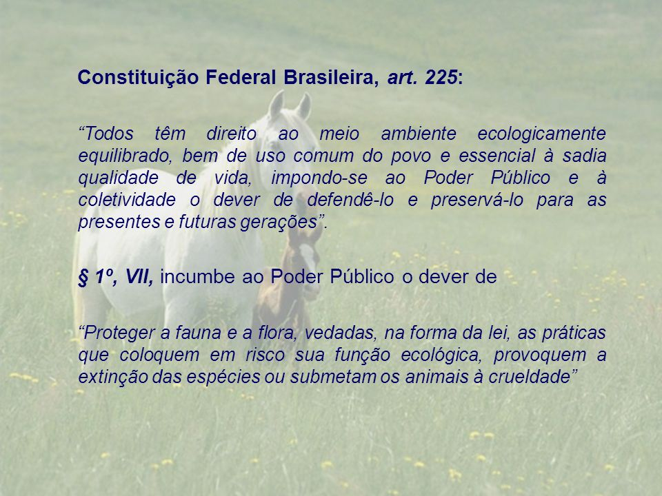 Constituição Federal Brasileira, art. 225: Todos têm direito ao meio ambiente ecologicamente equilibrado, bem de uso comum do povo e essencial à sadia