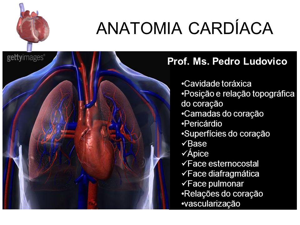 ANATOMIA CARDÍACA Prof.Ms.