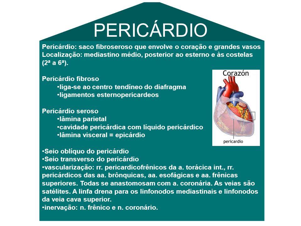 Pericárdio: saco fibroseroso que envolve o coração e grandes vasos Localização: mediastino médio, posterior ao esterno e às costelas (2ª a 6ª).
