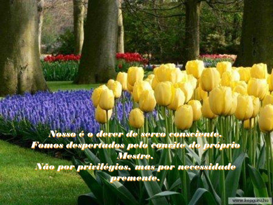 Nosso é o dever de servo consciente.Fomos despertados pelo convite do próprio Mestre.