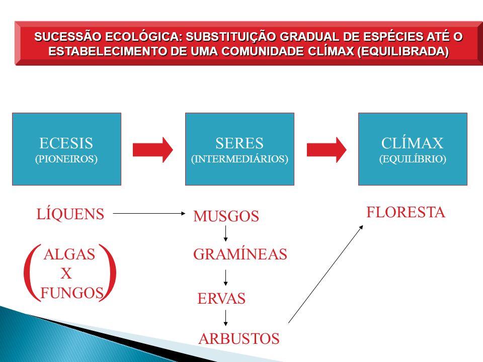 SUCESSÃO ECOLÓGICA: SUBSTITUIÇÃO GRADUAL DE ESPÉCIES ATÉ O ESTABELECIMENTO DE UMA COMUNIDADE CLÍMAX (EQUILIBRADA) ECESIS (PIONEIROS) SERES (INTERMEDIÁ