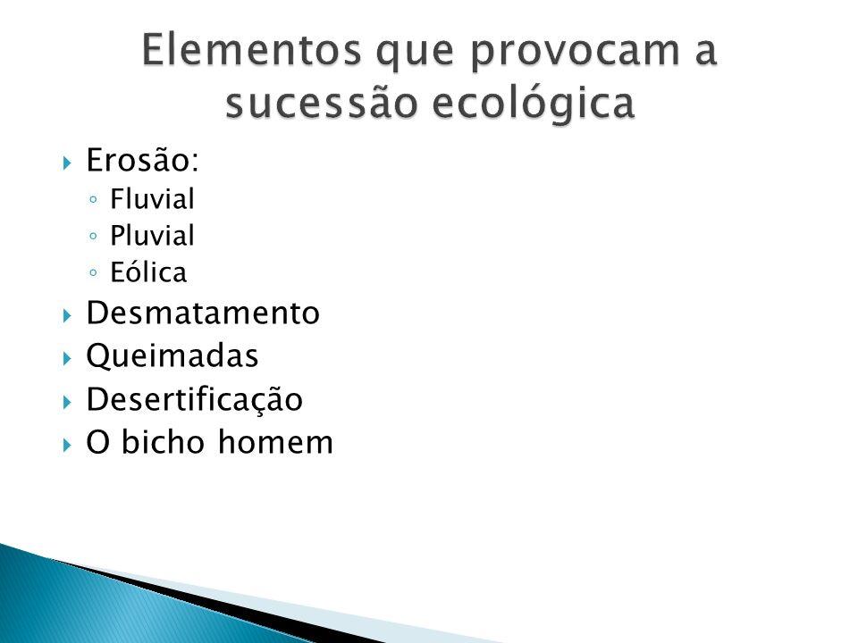 Erosão: Fluvial Pluvial Eólica Desmatamento Queimadas Desertificação O bicho homem
