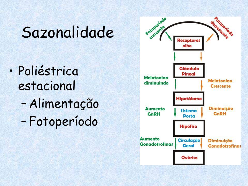 Prostaglandina comercial Sincronização Ov.