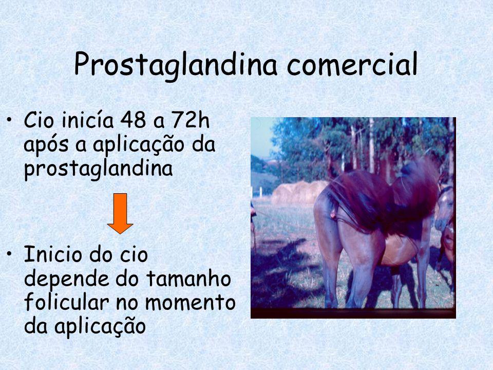 Cio inicía 48 a 72h após a aplicação da prostaglandina Inicio do cio depende do tamanho folicular no momento da aplicação