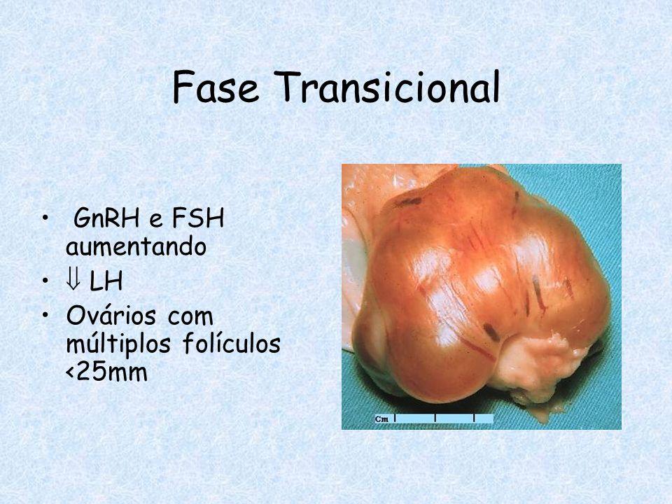 Fase Transicional GnRH e FSH aumentando LH Ovários com múltiplos folículos <25mm