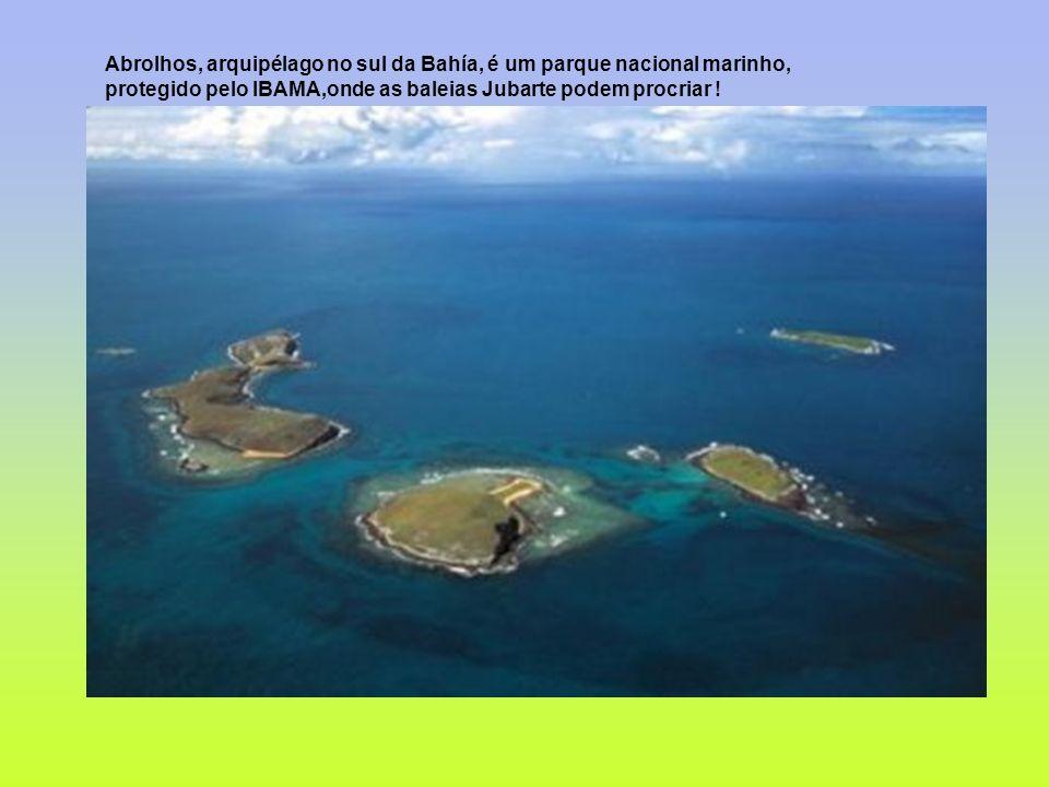 Abrolhos, arquipélago no sul da Bahía, é um parque nacional marinho, protegido pelo IBAMA,onde as baleias Jubarte podem procriar !