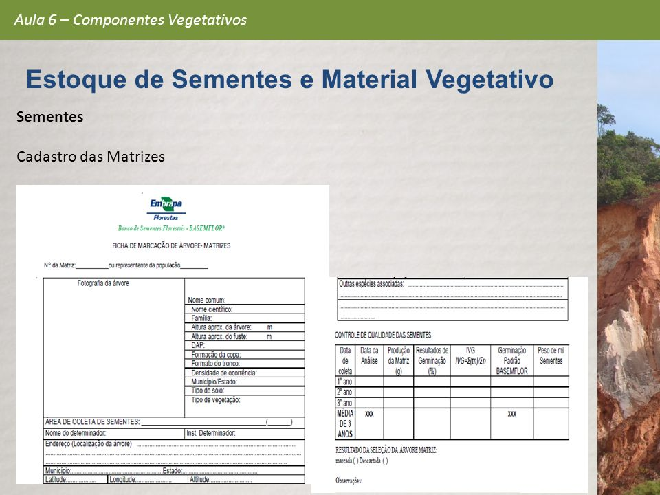 Sementes Cadastro das Matrizes Aula 6 – Componentes Vegetativos Estoque de Sementes e Material Vegetativo