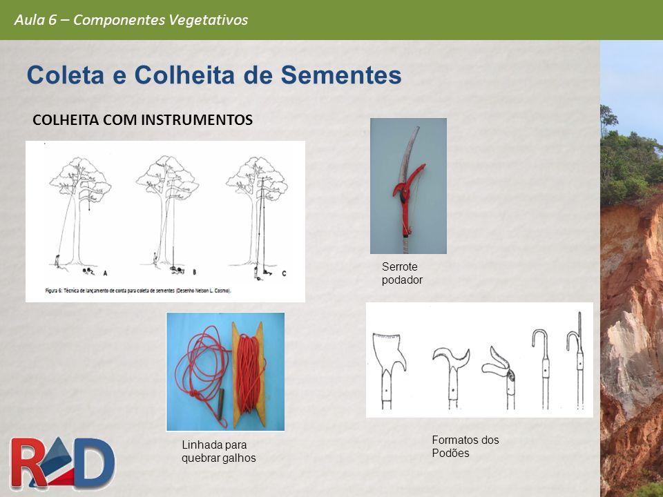 Aula 6 – Componentes Vegetativos Coleta e Colheita de Sementes COLHEITA COM INSTRUMENTOS Linhada para quebrar galhos Serrote podador Formatos dos Podõ