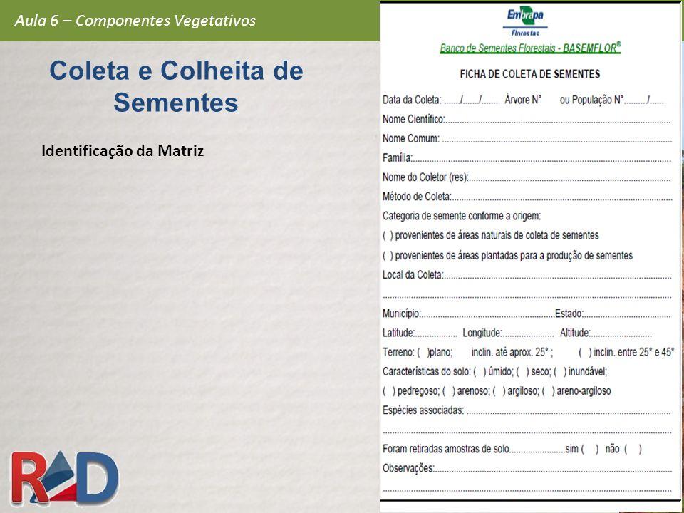 Aula 6 – Componentes Vegetativos Coleta e Colheita de Sementes Identificação da Matriz