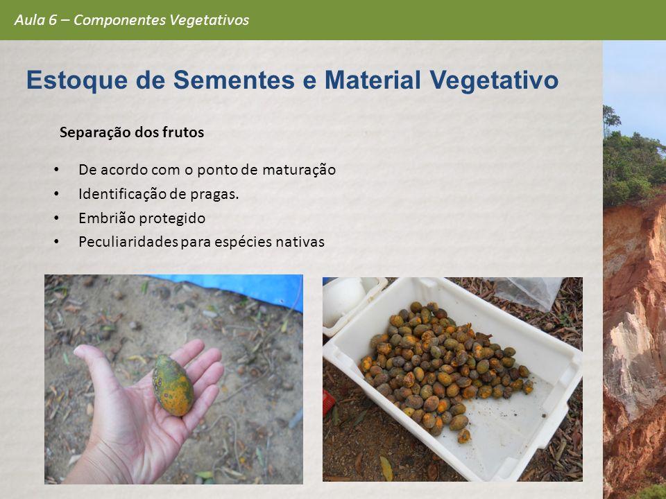 Separação dos frutos De acordo com o ponto de maturação Identificação de pragas. Embrião protegido Peculiaridades para espécies nativas Aula 6 – Compo