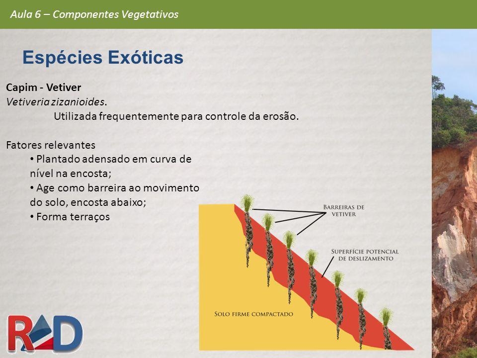 Capim - Vetiver Vetiveria zizanioides. Utilizada frequentemente para controle da erosão. Fatores relevantes Plantado adensado em curva de nível na enc