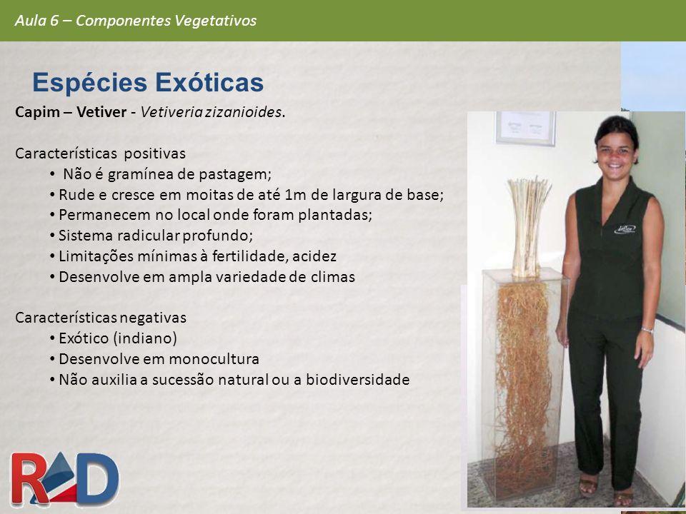 Capim – Vetiver - Vetiveria zizanioides. Características positivas Não é gramínea de pastagem; Rude e cresce em moitas de até 1m de largura de base; P