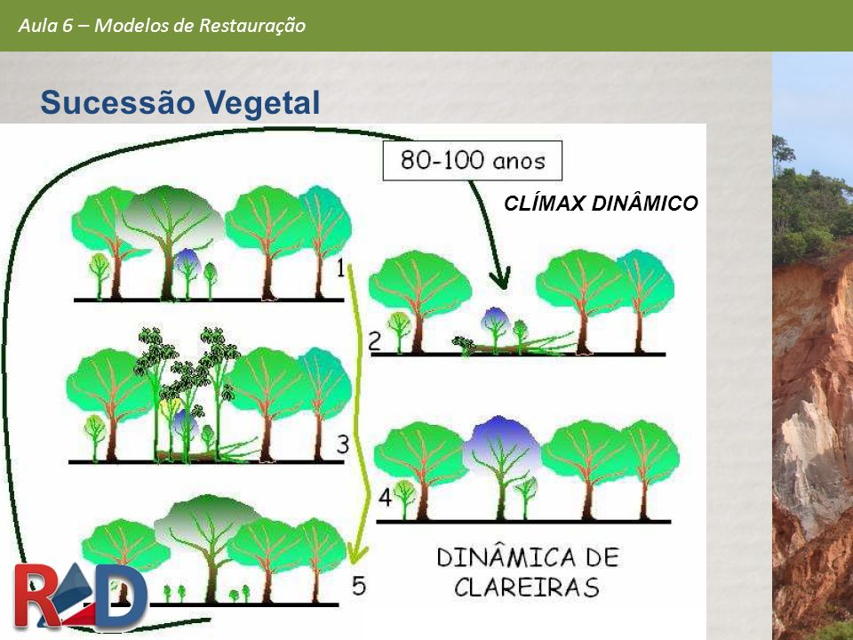 CLÍMAX DINÂMICO Aula 6 – Modelos de Restauração Sucessão Vegetal