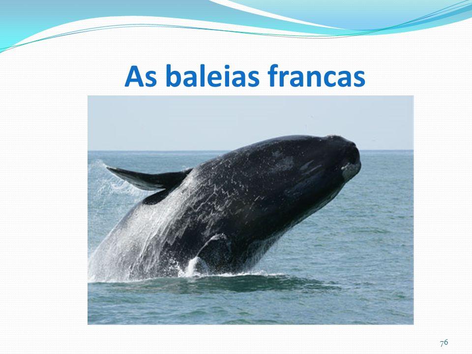 As baleias francas 76
