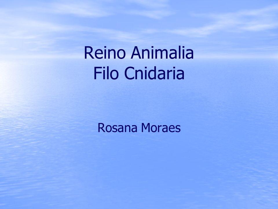 Classes dos Cnidários Hidrozoários: hidra e caravela-portuguesa.