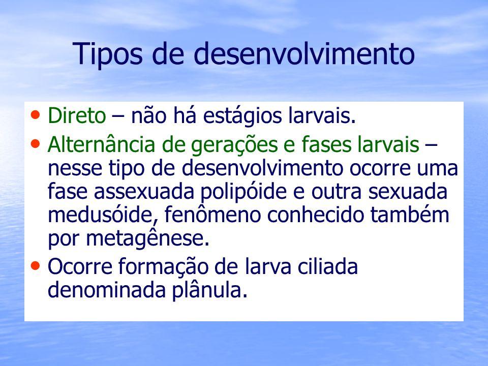 Tipos de desenvolvimento Direto – não há estágios larvais. Alternância de gerações e fases larvais – nesse tipo de desenvolvimento ocorre uma fase ass