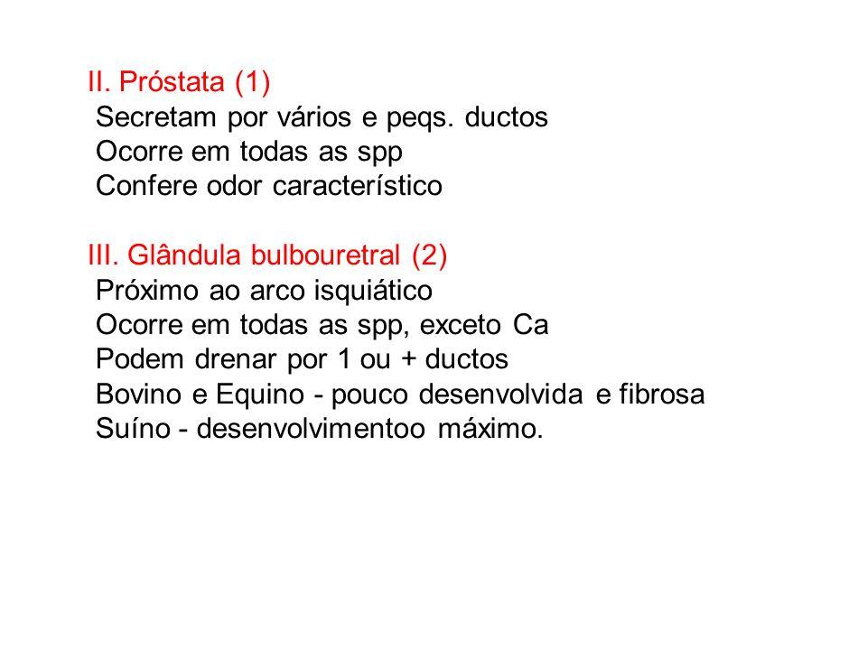 II. Próstata (1) Secretam por vários e peqs. ductos Ocorre em todas as spp Confere odor característico III. Glândula bulbouretral (2) Próximo ao arco