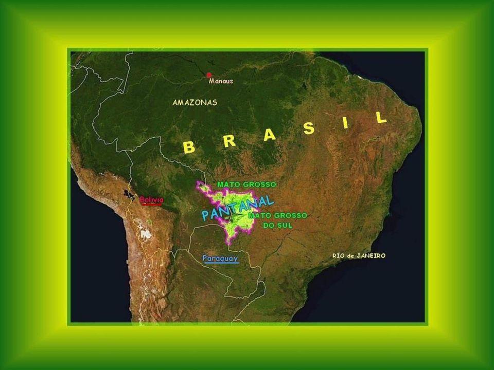 O PANTANAL É um ecossistema único no mundo que cobre uma grande área como que metade da França. A palavra Pantanal pode se traduzir como Pântano, em r