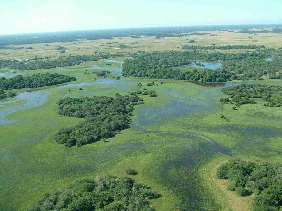 Vindo de terras altas, a drenagem de rios no PANTANAL vão para o rio Paraguai, o qual desce para o sul. Inundaçõesnão ocorrem de repente, mas gradualm