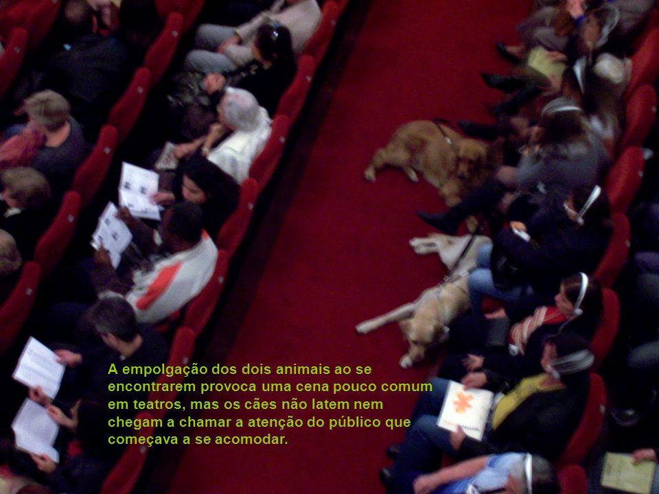 A empolgação dos dois animais ao se encontrarem provoca uma cena pouco comum em teatros, mas os cães não latem nem chegam a chamar a atenção do público que começava a se acomodar.