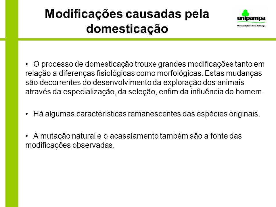 Modificações causadas pela domesticação O processo de domesticação trouxe grandes modificações tanto em relação a diferenças fisiológicas como morfoló