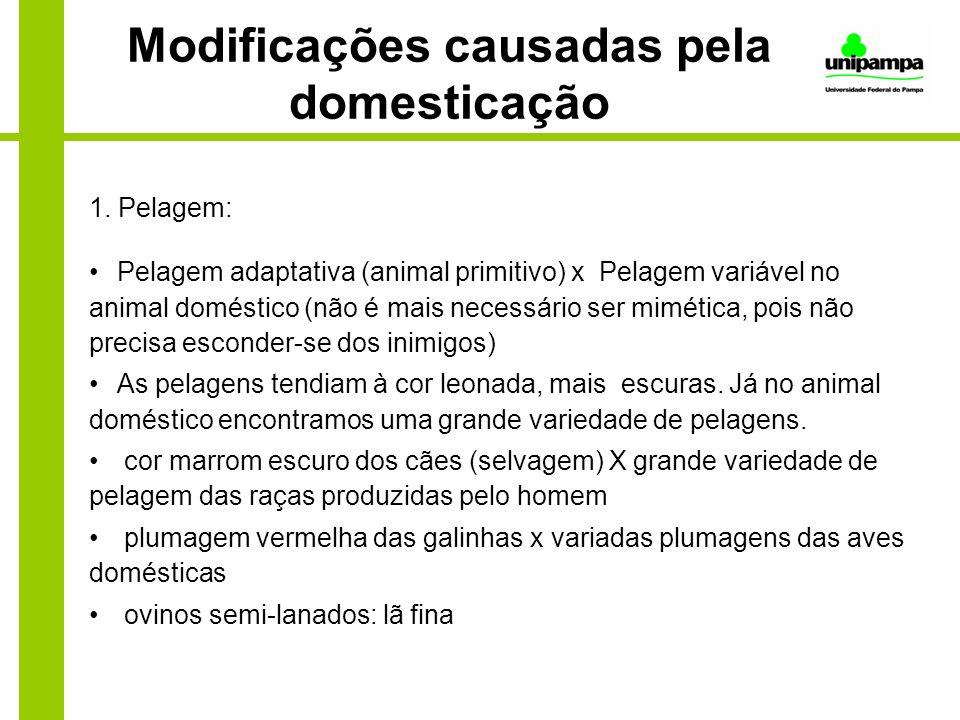 Modificações causadas pela domesticação 1. Pelagem: Pelagem adaptativa (animal primitivo) x Pelagem variável no animal doméstico (não é mais necessári