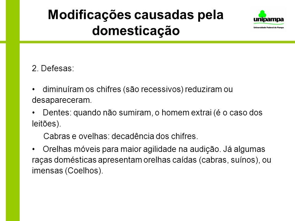 Modificações causadas pela domesticação 2. Defesas: diminuíram os chifres (são recessivos) reduziram ou desapareceram. Dentes: quando não sumiram, o h