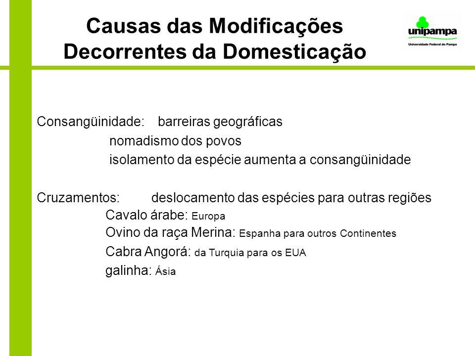 Causas das Modificações Decorrentes da Domesticação Consangüinidade: barreiras geográficas nomadismo dos povos isolamento da espécie aumenta a consang