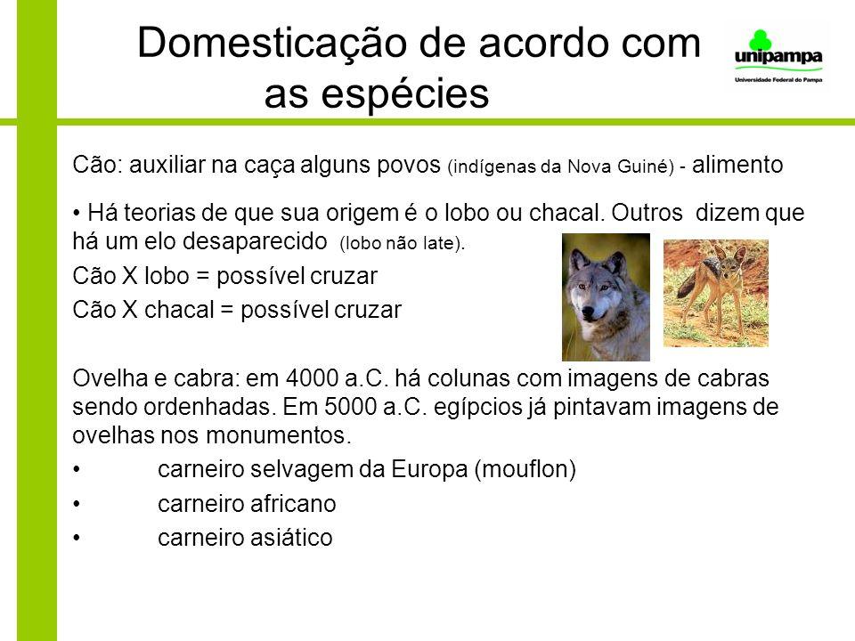 Domesticação de acordo com as espécies Cão: auxiliar na caça alguns povos (indígenas da Nova Guiné) - alimento Há teorias de que sua origem é o lobo o