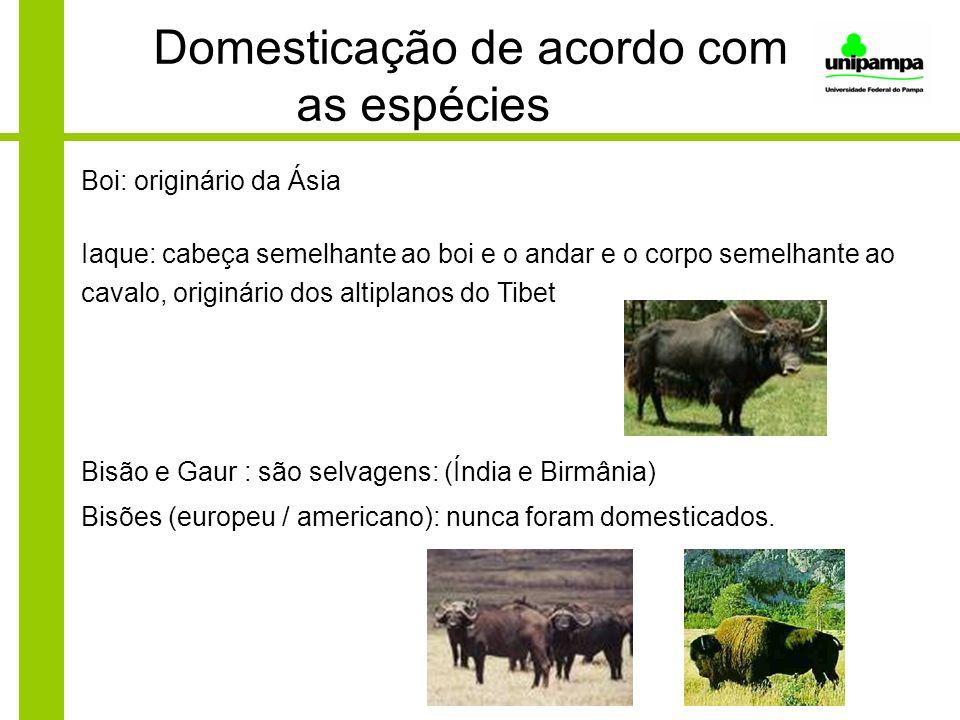 Domesticação de acordo com as espécies Boi: originário da Ásia Iaque: cabeça semelhante ao boi e o andar e o corpo semelhante ao cavalo, originário do