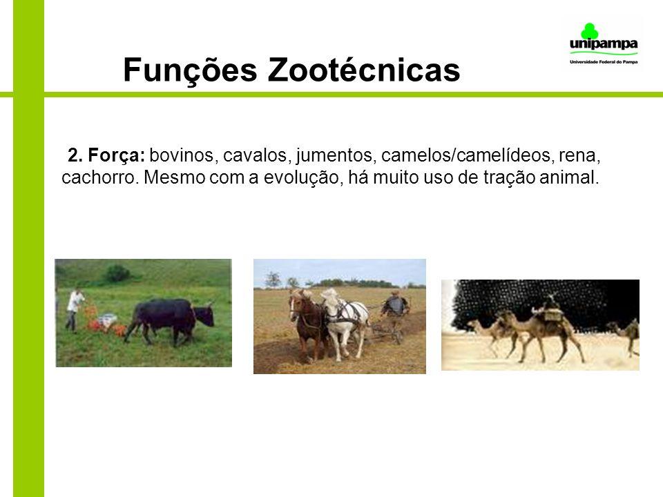 Funções Zootécnicas 2. Força: bovinos, cavalos, jumentos, camelos/camelídeos, rena, cachorro. Mesmo com a evolução, há muito uso de tração animal.