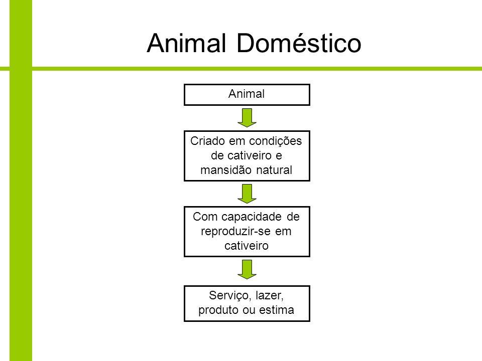 Animal Doméstico Animal Criado em condições de cativeiro e mansidão natural Com capacidade de reproduzir-se em cativeiro Serviço, lazer, produto ou es