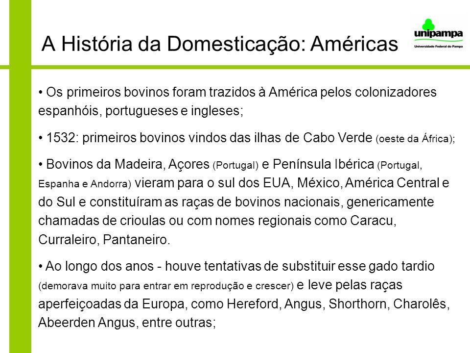 A História da Domesticação: Américas Os primeiros bovinos foram trazidos à América pelos colonizadores espanhóis, portugueses e ingleses; 1532: primei