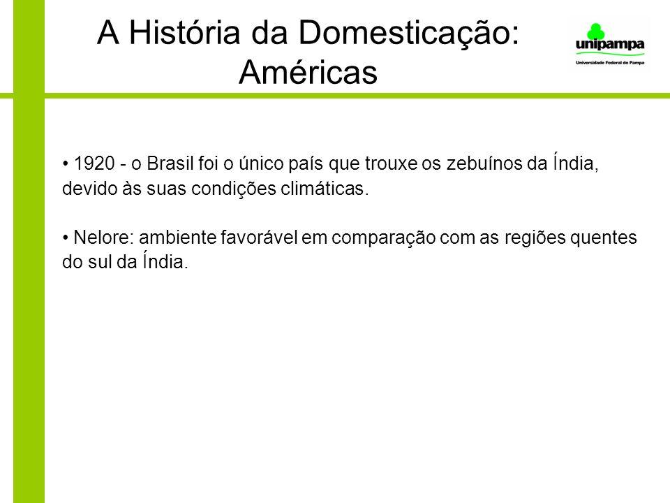 A História da Domesticação: Américas 1920 - o Brasil foi o único país que trouxe os zebuínos da Índia, devido às suas condições climáticas. Nelore: am