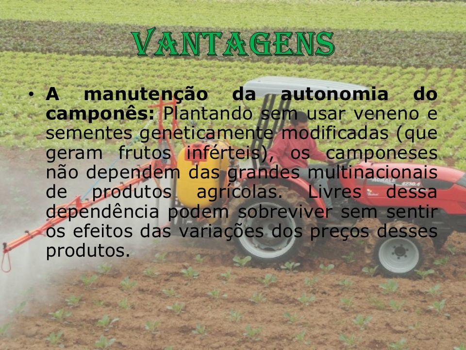 A manutenção da autonomia do camponês: Plantando sem usar veneno e sementes geneticamente modificadas (que geram frutos inférteis), os camponeses não