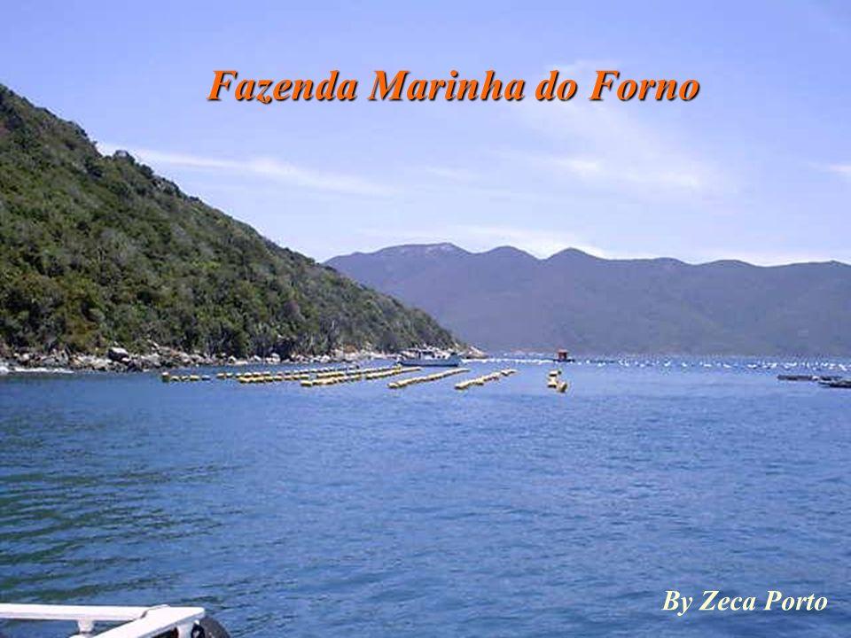 Flutuante do Forno By Zeca Porto