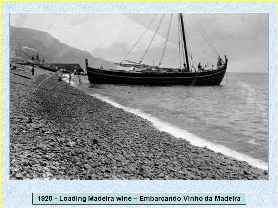 1919 – Parelha de bois transportando pipas de Vinho da Madeira