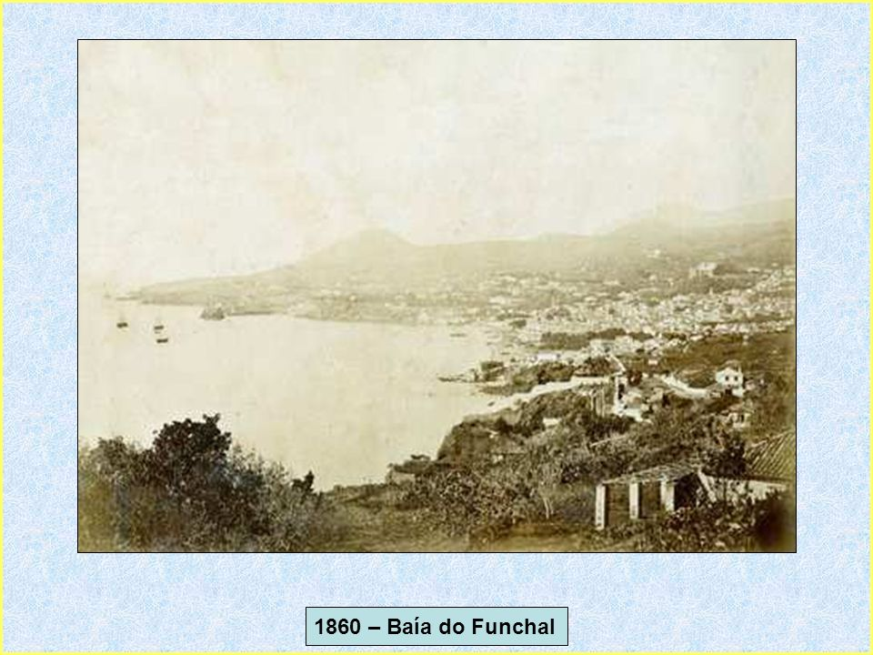 1935 - São VicenteMadeira- As Famosas Bananeiras