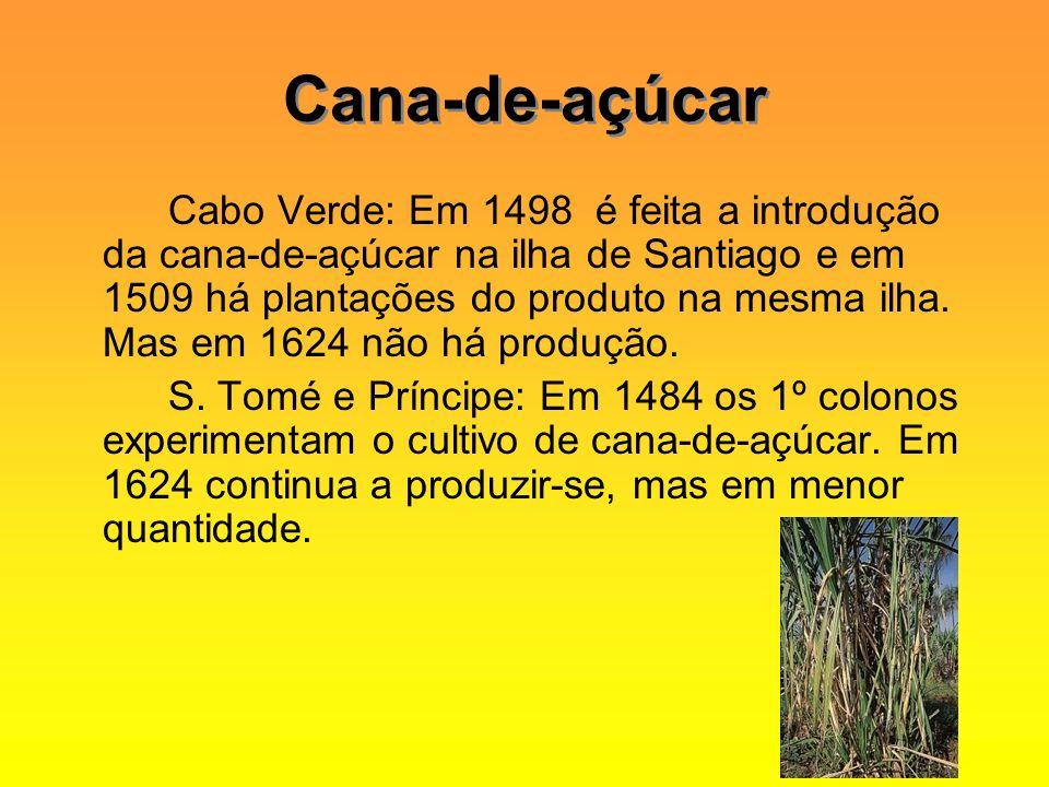 Cana-de-açúcar Cabo Verde: Em 1498 é feita a introdução da cana-de-açúcar na ilha de Santiago e em 1509 há plantações do produto na mesma ilha. Mas em