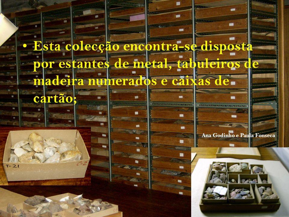 Esta colecção encontra-se disposta por estantes de metal, tabuleiros de madeira numerados e caixas de cartão; Ana Godinho e Paula Fonseca