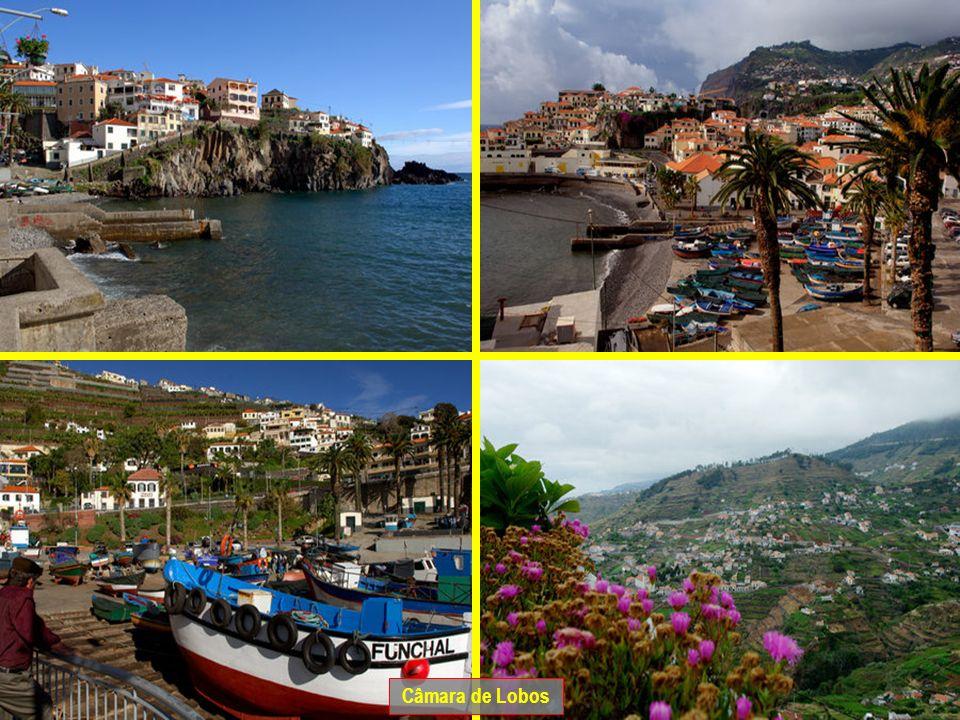 Câmara de Lobos vila piscatória situada a 5 km do Funchal. O nome foi-lhe dado devido à forma da sua baía (câmara) e por causa de haver muitos lobos m