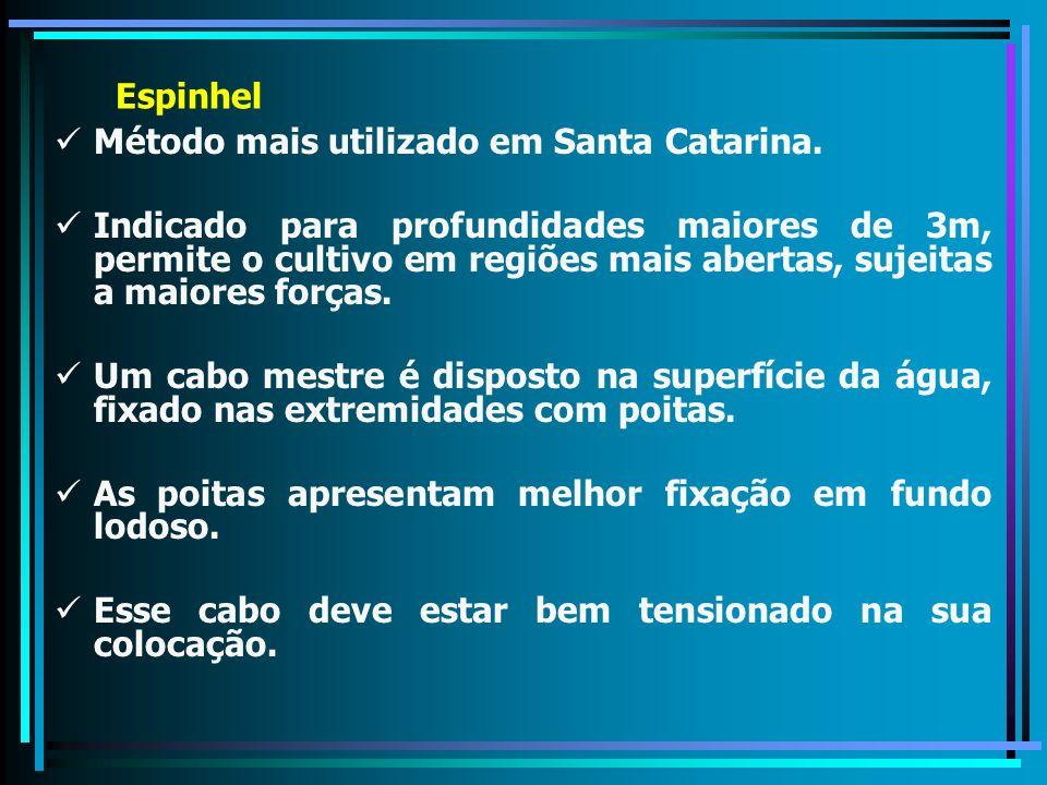 Espinhel Método mais utilizado em Santa Catarina. Indicado para profundidades maiores de 3m, permite o cultivo em regiões mais abertas, sujeitas a mai