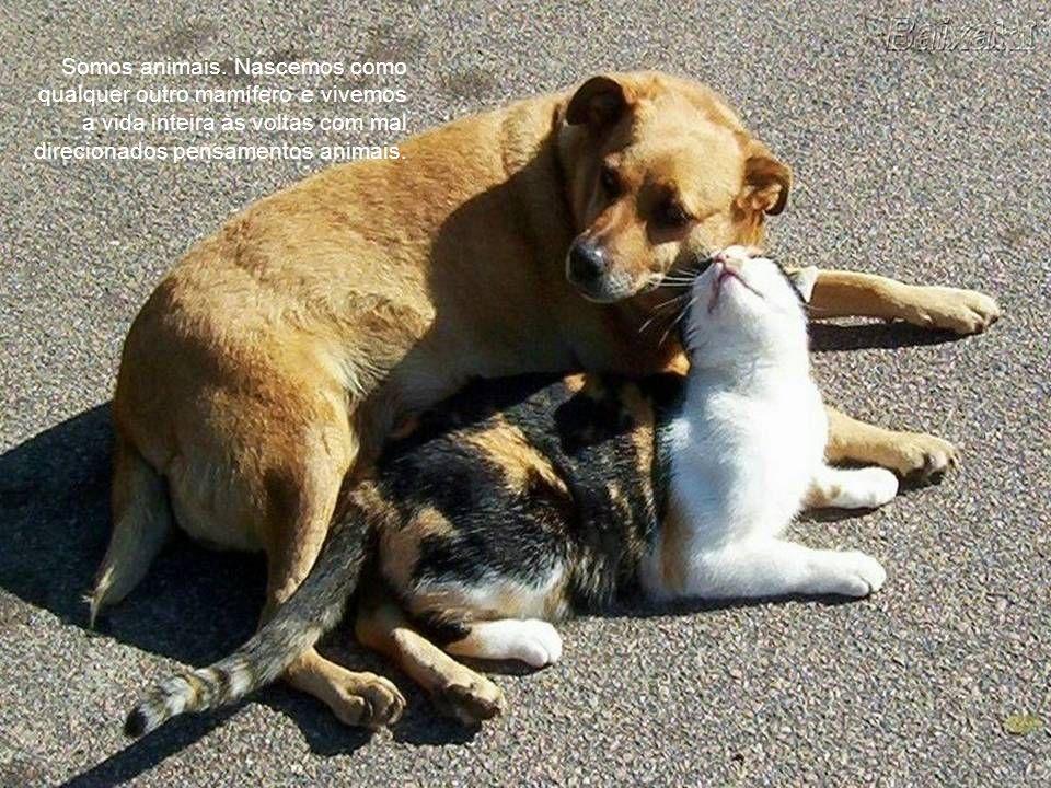 Penso que testar em animais é um terrível engano; eles ficam nervosos e dão respostas erradas.