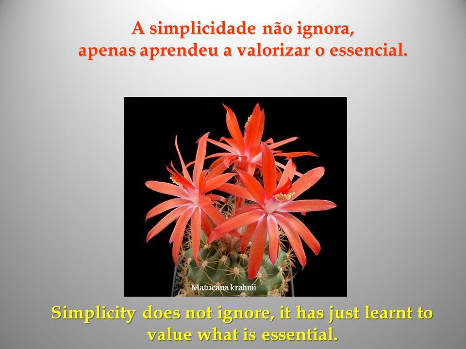 Mammillaria albiflora Uma infância que não se angustia com as dúvidas de quem ainda tem tudo por fazer e conhecer. A childhood that is not on distress